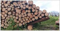 樹づ木ブログ