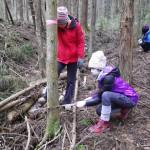 地域の放置林を活用した保健休養の研究