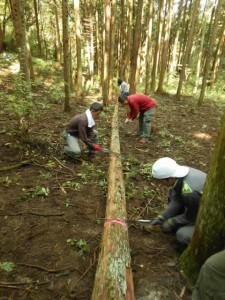 放置林作業