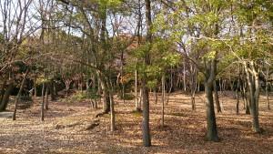 服部緑地ちかくの森
