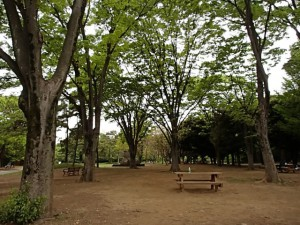 Yoyogi Park Spring