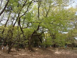 服部緑地 ちかくの森